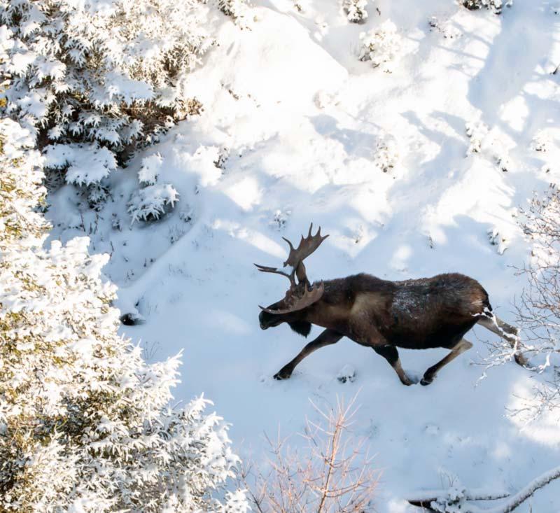 Newfoundland Moose Hunt Camp