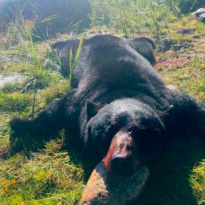 Bear Hunting Outfitter Newfoundland Hunting Rates