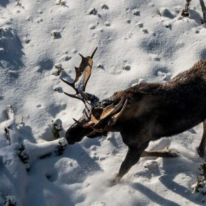 Big Game Hunting Outfitters Newfoundland Canada
