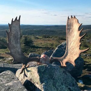 Newfoundland Hunting Rates Big Game Outfitters
