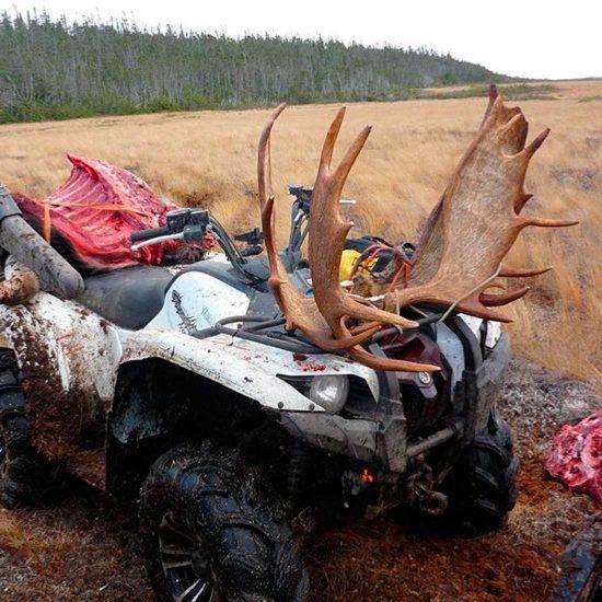 Newfoundland Moose Hunting and Black Bear Hunts