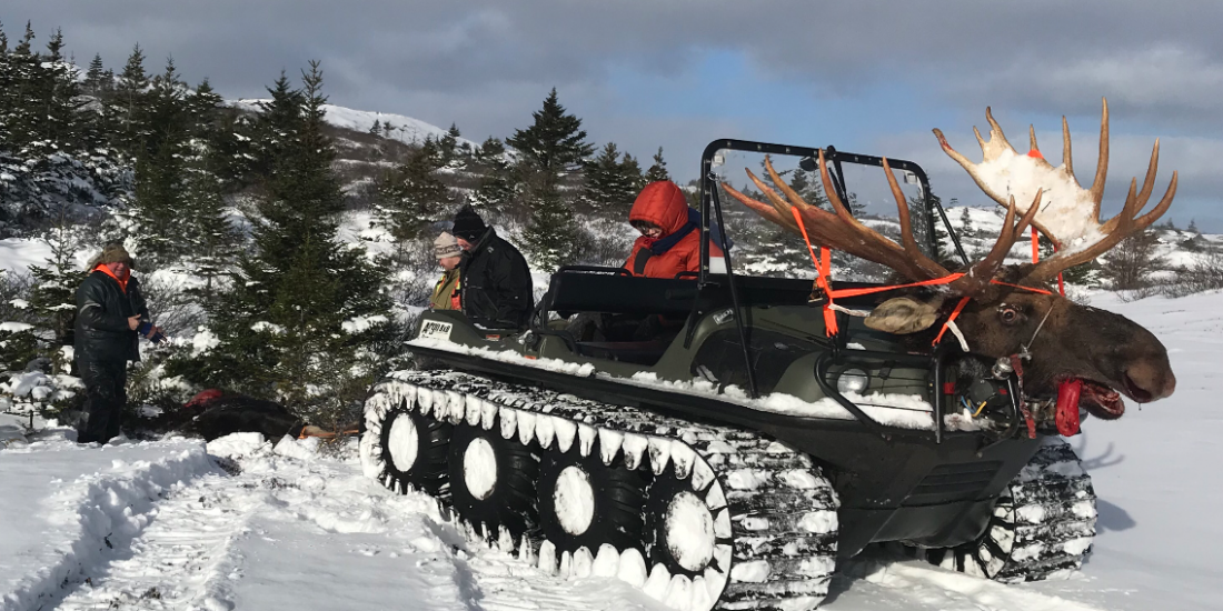 Newfoundland Moose Hunting Guides and Outfitters