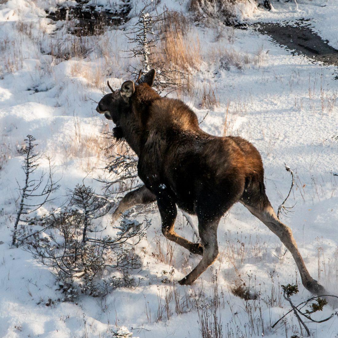 Big game hunting camp Newfoundland Canada
