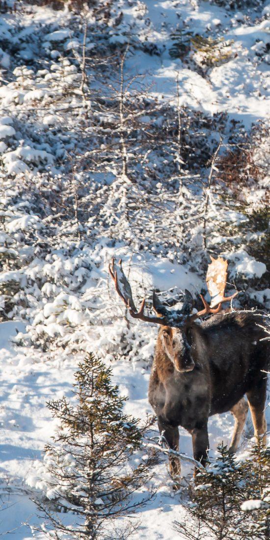 Newfoundland big game hunting camp